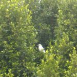 Coronado Birds: Snowy Egret and Black-Crowned Night Heron | Writer Mariecor | WriterMariecor.com