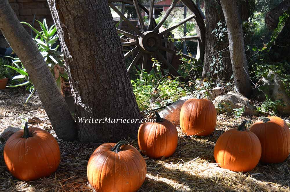 Pumpkins04