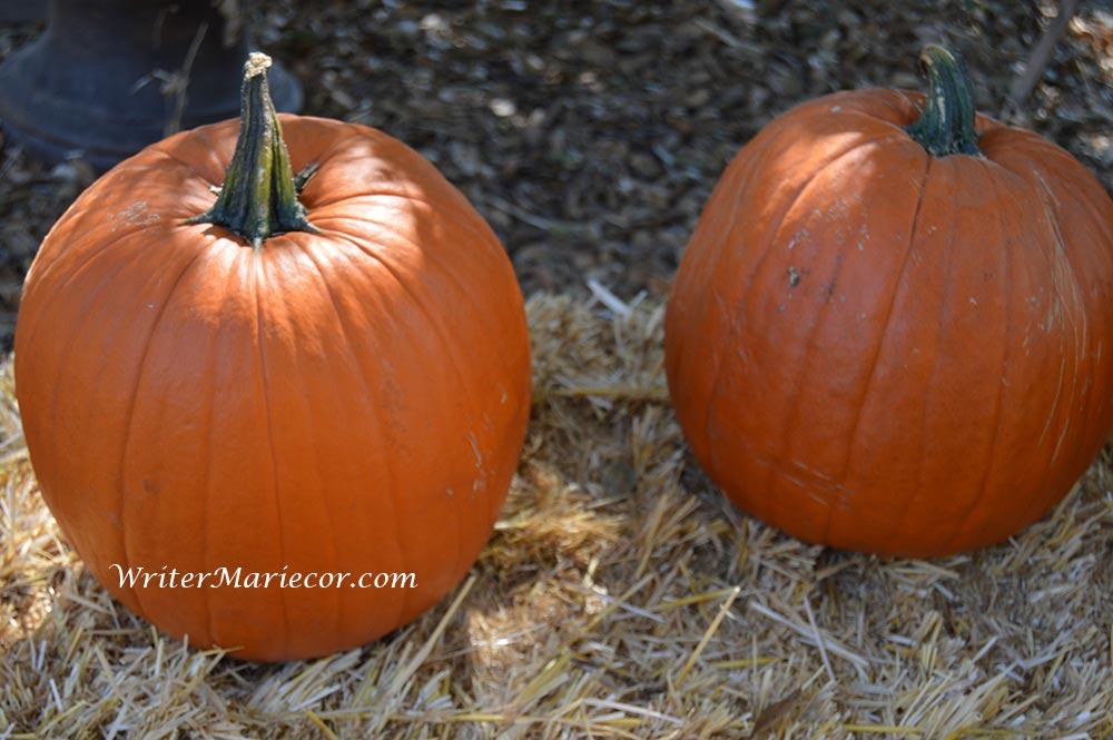Pumpkins06
