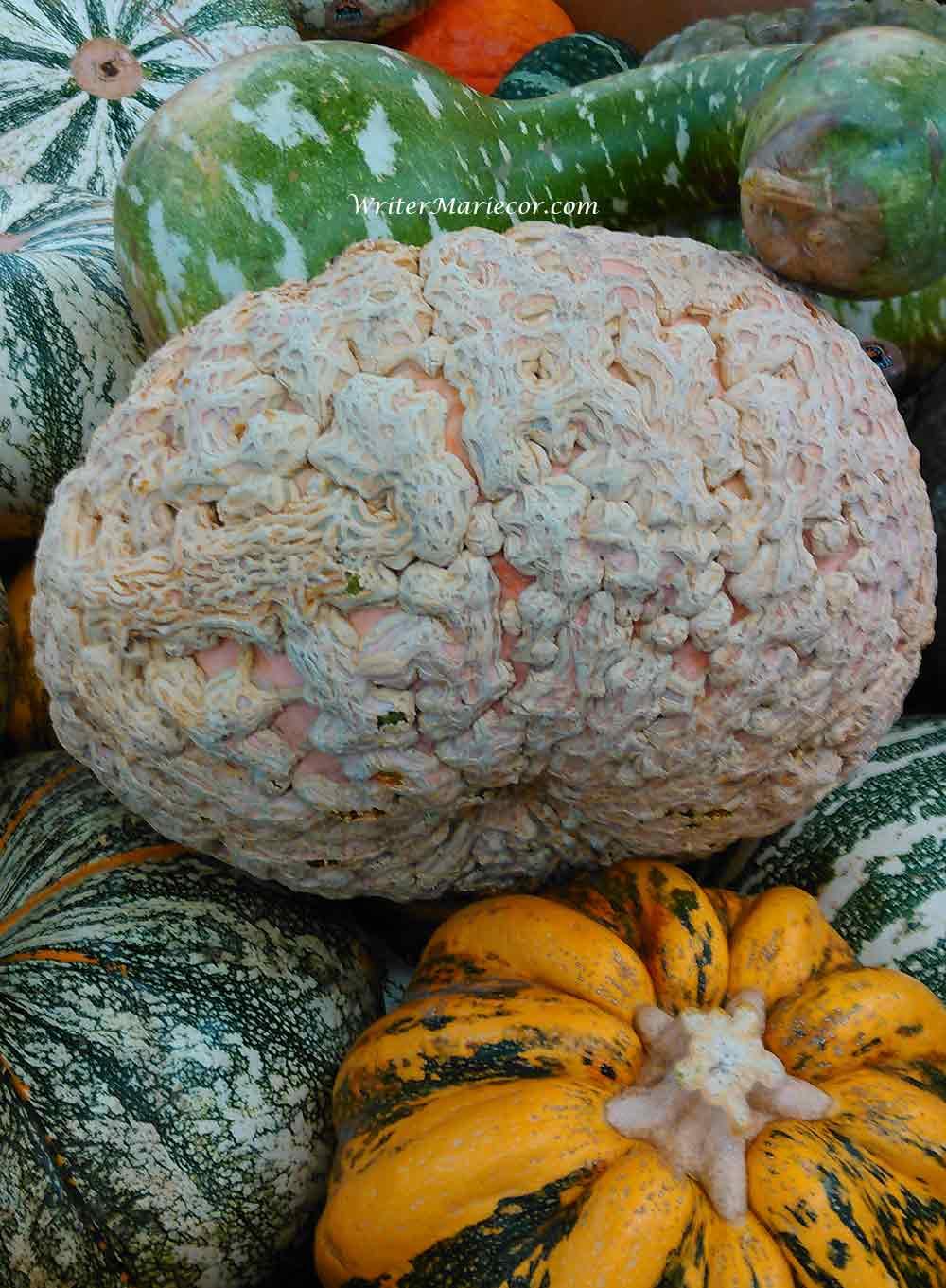 Pumpkins09a
