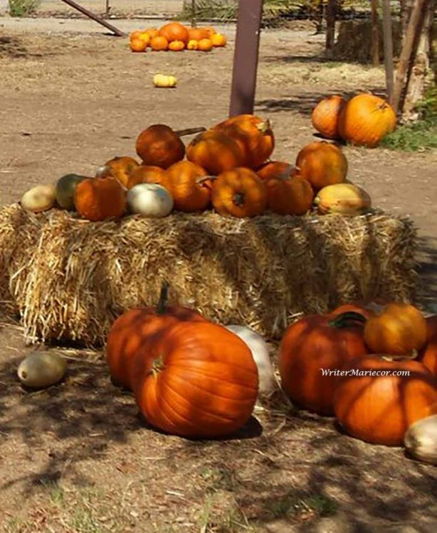 Pumpkins22