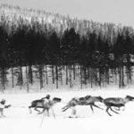 Skijoring with Reindeer | Writer Mariecor | WriterMariecor.com