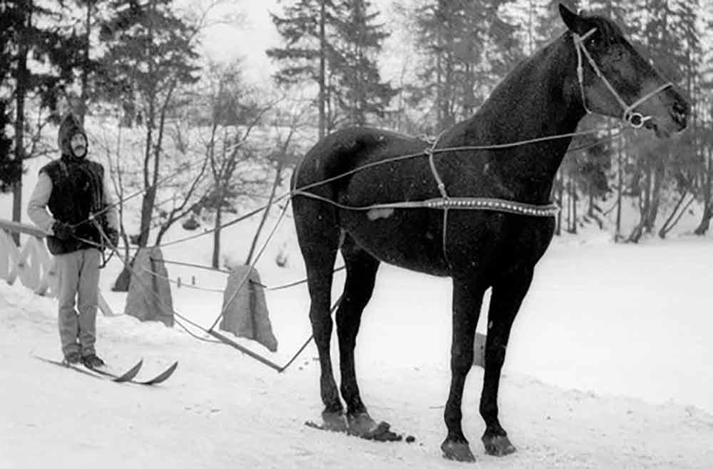 skijoring-history1