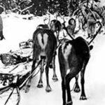 Skijoring reindeer train | Writer Mariecor | WriterMariecor.com