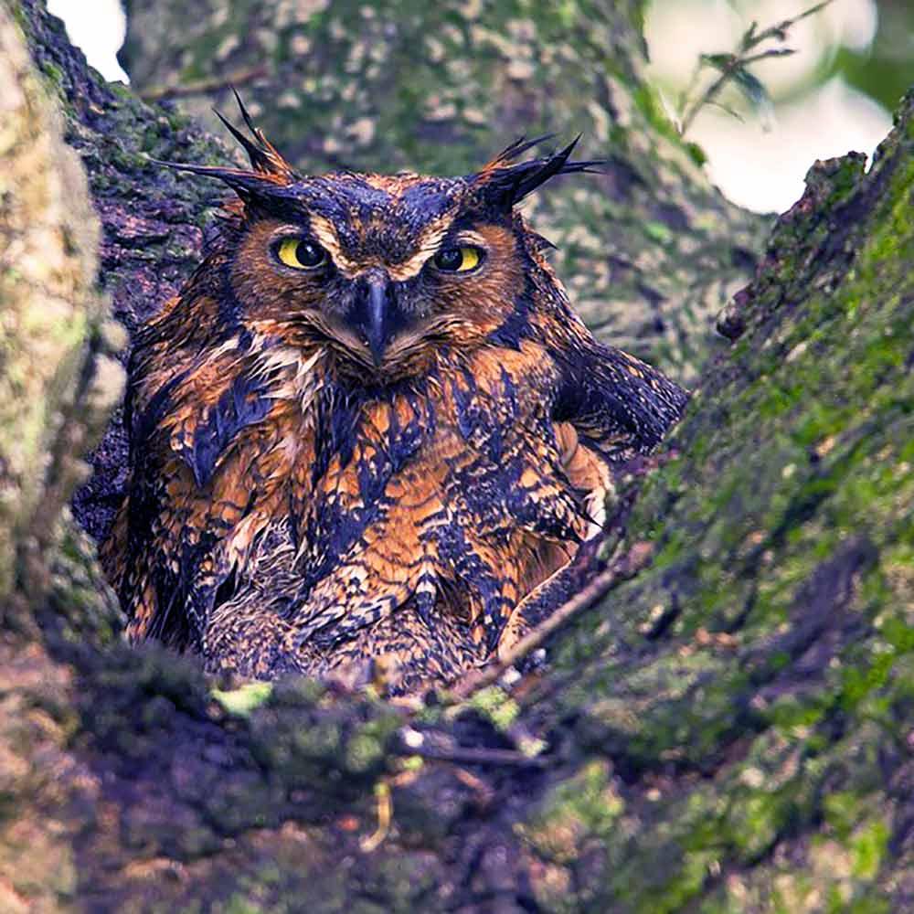 Camouflaged Owl I Writer Mariecor I WriterMariecor.com