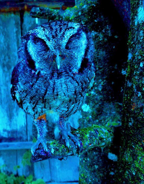 Dozing Owl I Writer Mariecor I WriterMariecor.com