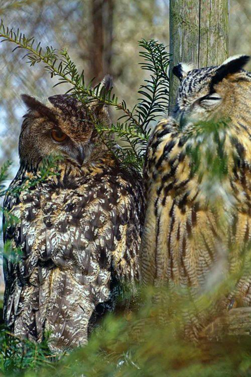 Owl Duo I Writer Mariecor I WriterMariecor.com
