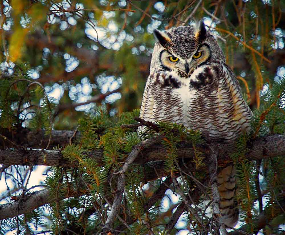 Owl on its bower perch I Writer Mariecor I WriterMariecor.com